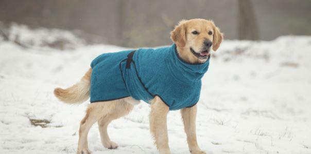een prachtige hondenbadjas voor uw hond